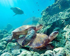 turtle23