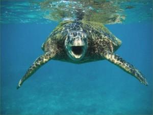 turtle25