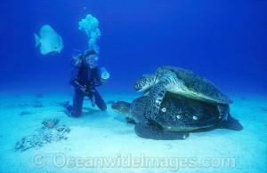 turtle26