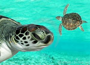 turtle27