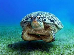 turtle33