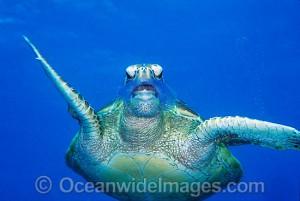 turtle35