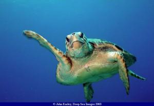 turtle36