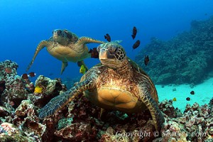 turtle5