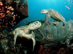 turtle7